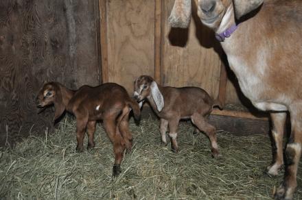 Hazel's Babies