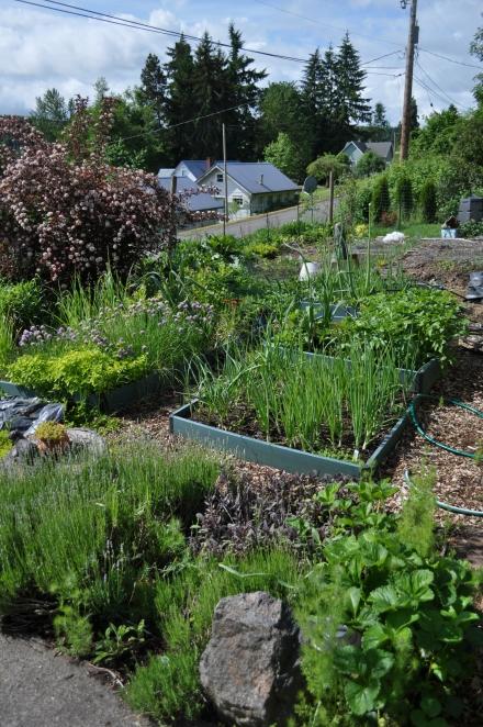 My Modern Victory Garden